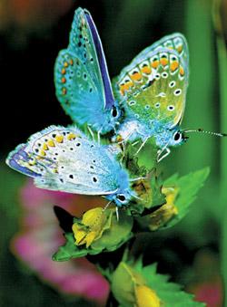 http://rivafauziah.files.wordpress.com/2007/05/butterfly2.jpg