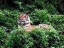 taman-safari.jpg