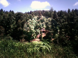 Hutan Cianjur Tambah Gundul