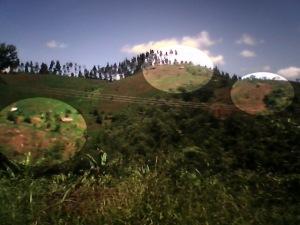 Hutan Gundul Berpotensi Kekeringan