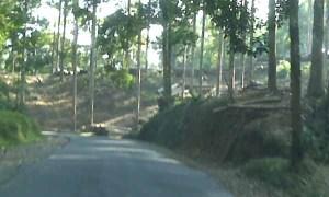 Hutan Cianjur Gundul